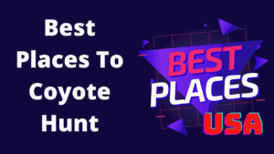 Best Coyote Hunting Places in the USA