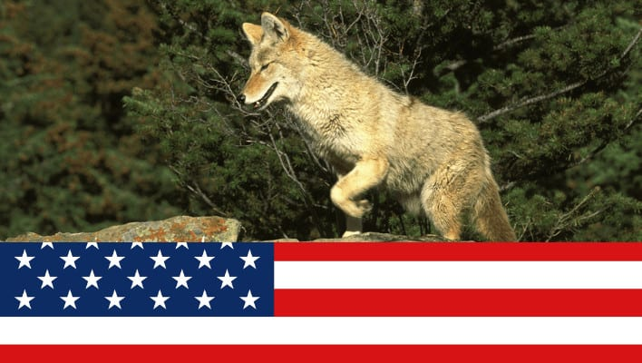 Best Places to Coyote Hunt in the USA