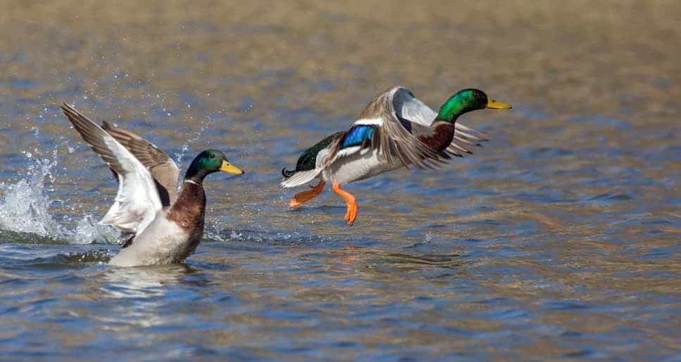 Two Hunters are Duck Hunting in a Boat. What is The Safest Position?