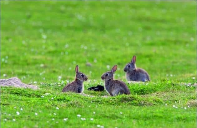 how to find rabbits